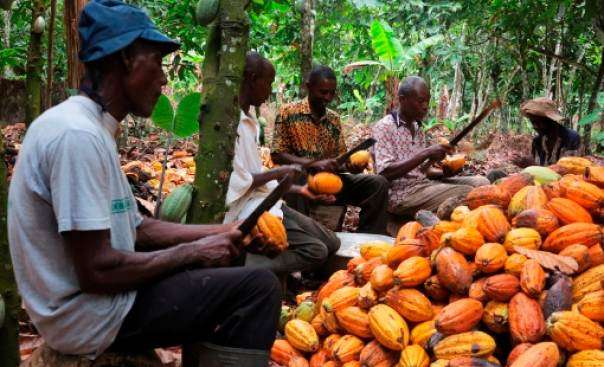 Photo of COCOBOD signs $1.3bn loan to purchase cocoa beans next season