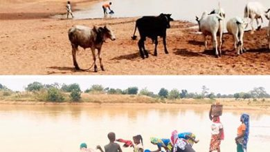 Photo of Bono Region: Wenchi residents share water with animals (Photos)